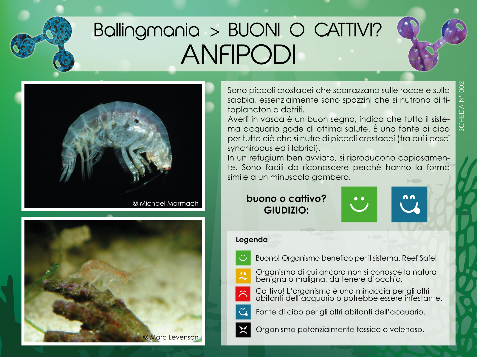 Anfipodi