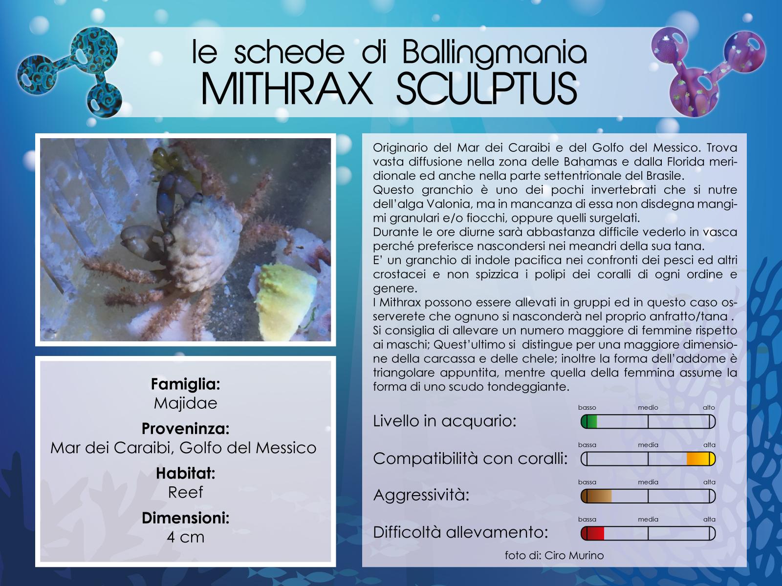 Mithrax Sculptus