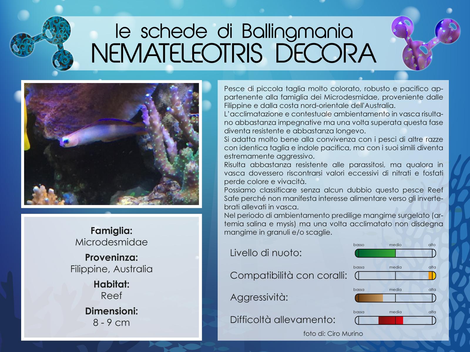 Nemateleotris Decora