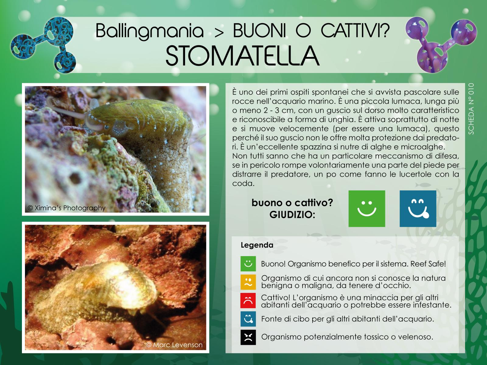 Stomatella