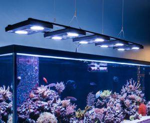 Osveshhenie-akvariuma