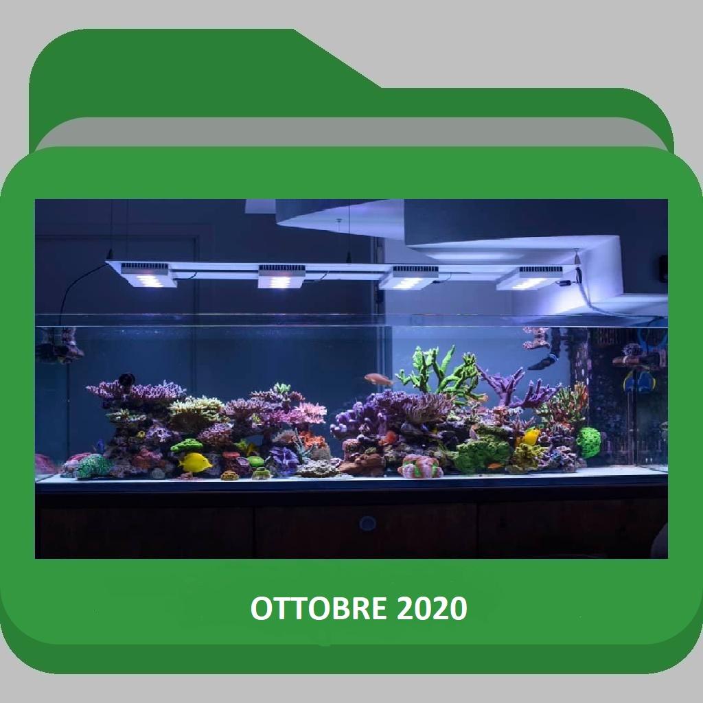 AcquarioOttobre 2020
