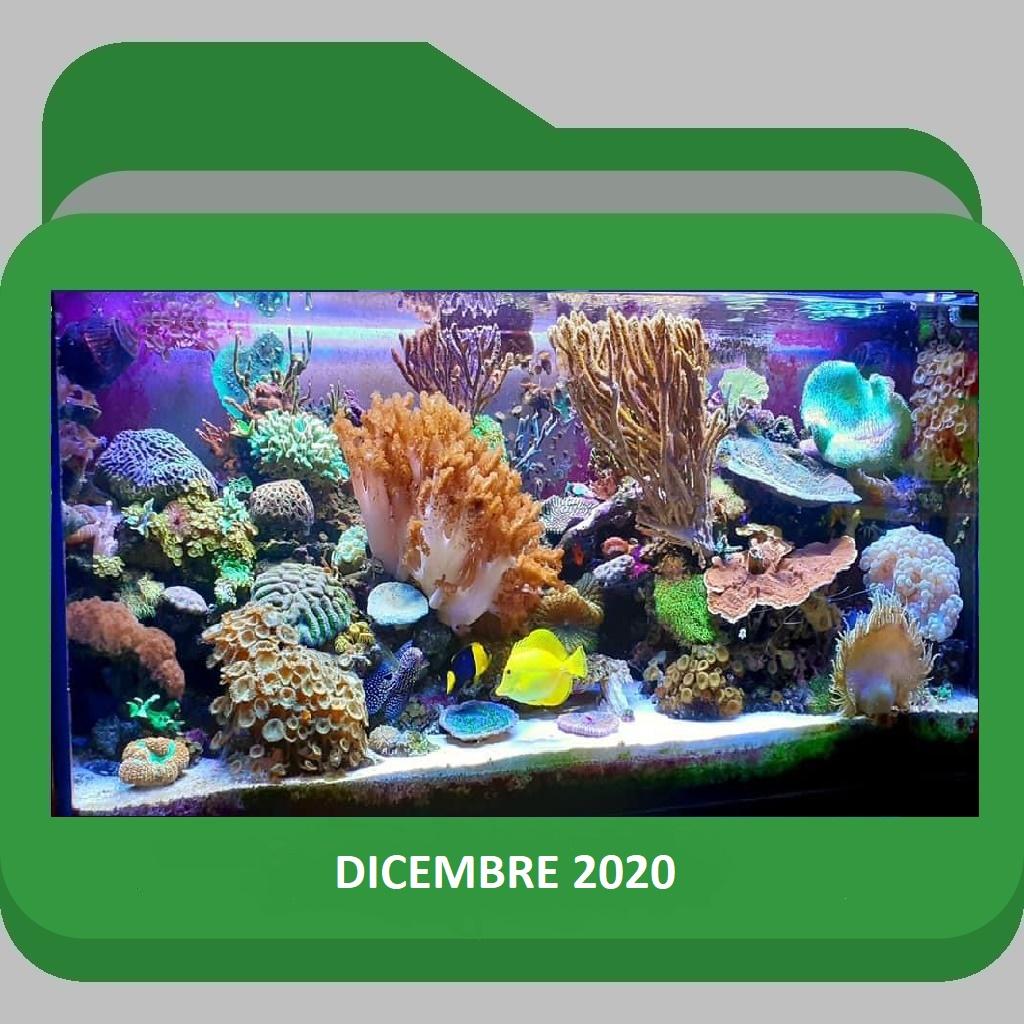 AcquarioDicembre2020